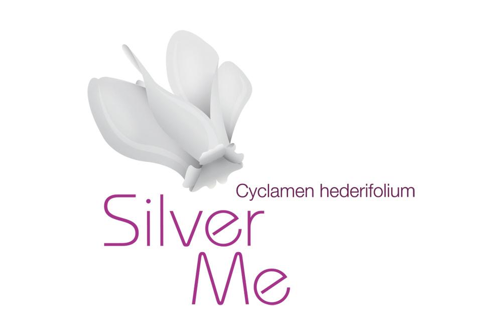 Cyclamen silver me