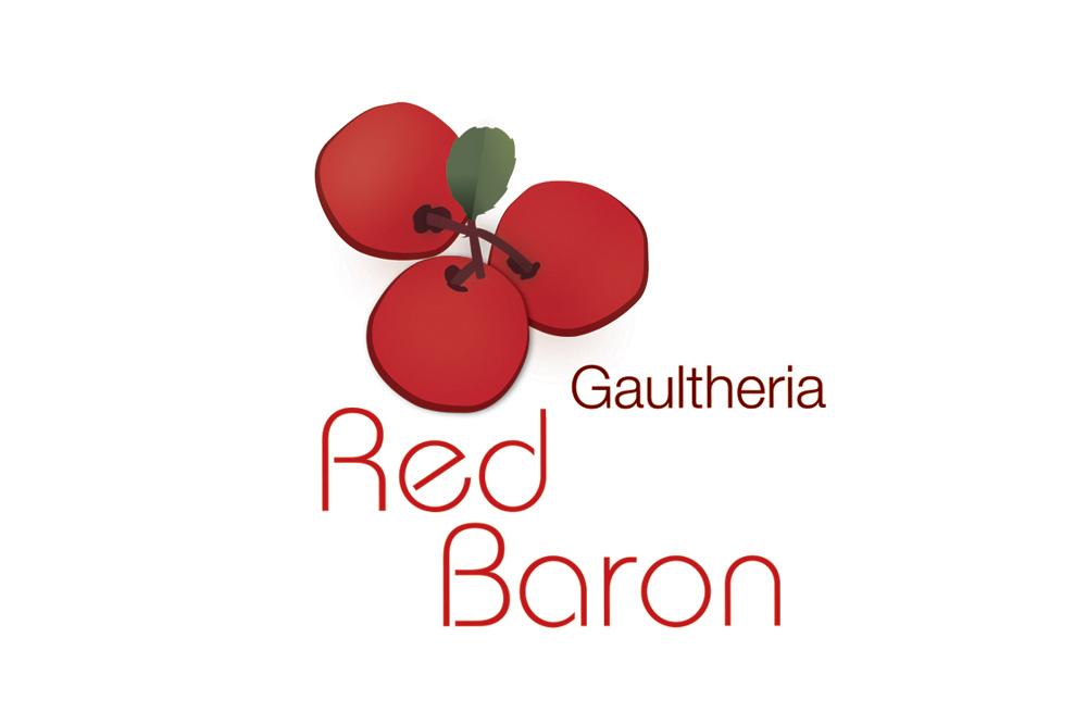 gaultheria red baron